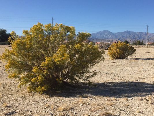 Vacant land at the corner of Two Bunch Palms Trail and Little Morongo Road in Desert Hot Springs. The city has approved three massive marijuana cultivation facilities for this area.(Photo: Kia Farhang/The Desert Sun)